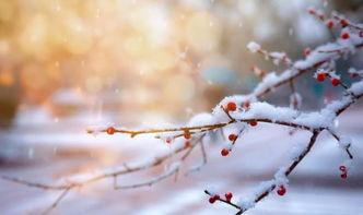 雪在古诗词代指