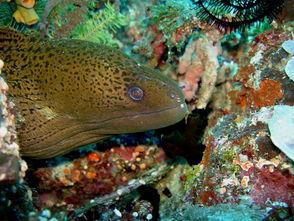 10大会吓尿你的海洋美食生物