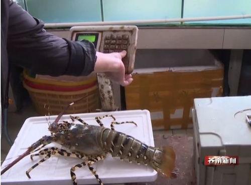 我在青岛开发区,哪有卖干海鲜礼盒的?要品种多些的