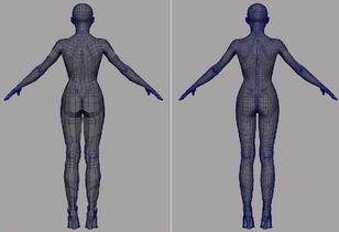 人体结构图片素材 10571497