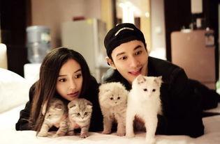 黄晓明baby夫妇与爱猫