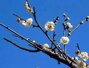 关于冬天竹子的诗句
