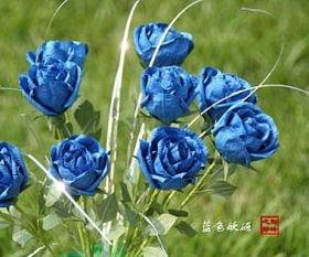利群蓝色妖姬(利群烟图片及价格)