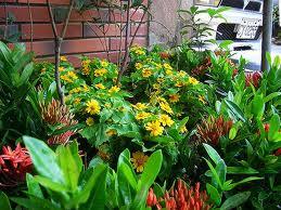 家庭养花适合什么肥料