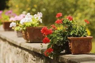 冬季养花保暖房
