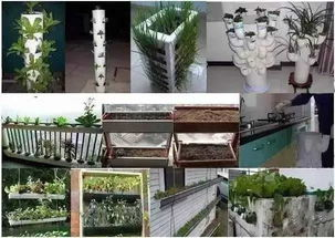阳台自制pvc管养花