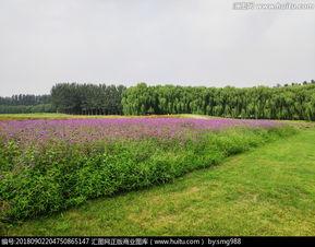 梦幻紫纱裙的做法