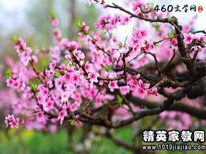 描写桃花的优美段落_描写桃花的优美词句段