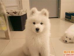 阿拉斯加雪橇犬照片 阿拉斯加照片 雪橇犬照片 豚豚 眼泪汪汪状 麻,真的真的真的不像 麻麻 呃...当演员有啥好,咱家有一个就好了,狗仔队追着你多烦啊