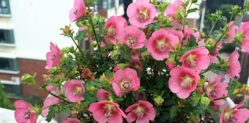 养花要每天浇水吗