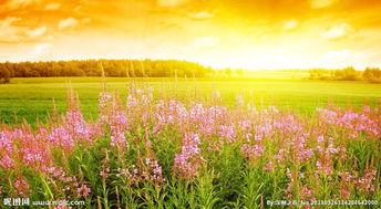夏日花景图片