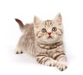 常见的宠物猫咪