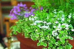 关于养花的光照