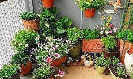 养花的土质怎样变碱性