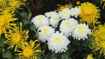 养花文中的佳句养花---老舍
