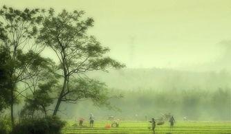 谷雨季节需要注意的养生常识