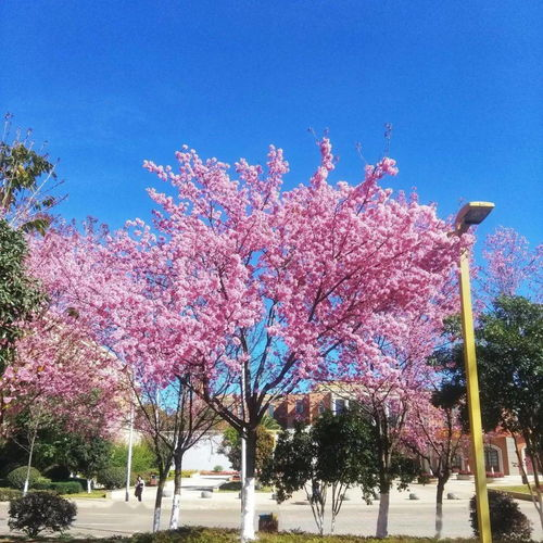 云南大学城有哪些大学城 自学考试