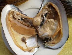 河蚌咸肉豆腐汤的做法