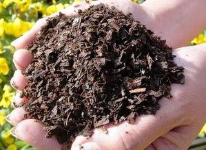 氢体土可以养花