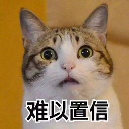 吓得我抱紧了我的小猫咪微博