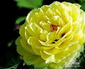 插花常用花材常识