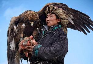 猎鹰驯化面临失传 训鹰师需与猎鹰朝夕相处4年