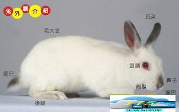 描写小白兔优美的句子