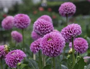 五行与养花