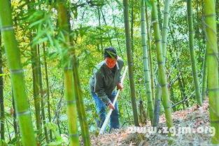 竹笋加工方法及竹笋烘干机的使用窍门