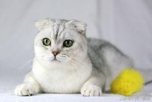 世界九种最萌的宠物猫 你养的是什么猫