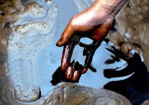 有关地沟油的化学常识