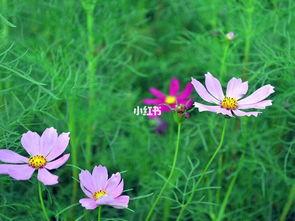 八字木多养花