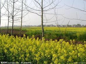 农村乡村 自然景观图片
