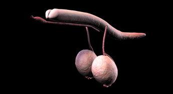 我们了解吗:患精索静脉曲张症会影响生育吗  精索静脉曲张生育几率