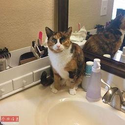 精装版猫发怒的四客服语