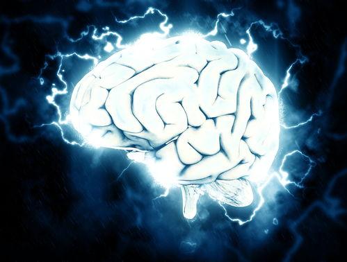 不过研究人员强调,「这并不是活著的大脑」,