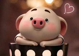 猪生男宝还是女宝带来财运