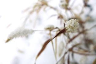 关于春天的花的现代诗句