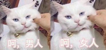 研究报告关于猫