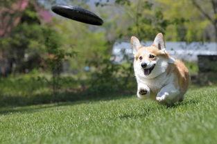 给正在养狗和即将养狗的你常德市文明养犬倡议书