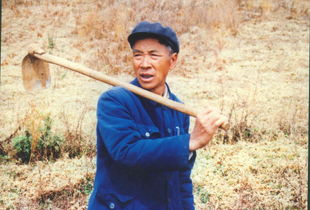 杨善洲在田里插秧