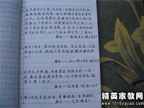 儒林外史读书笔记摘抄好词好句好段及感悟
