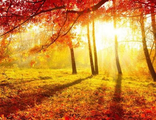 描写秋天叶的诗句古诗词