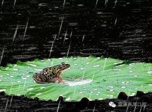 关于春天来了的常识青蛙小学