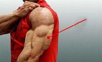 健身之粗壮手臂获得指南