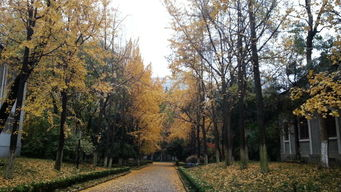 桌面南京大学