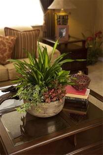 家里养花需要的花架