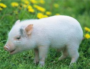 金牛座属猪的女人命运