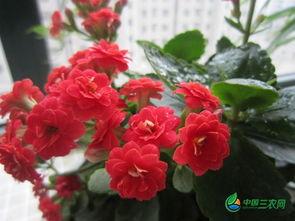 耐寒好养花期长的花卉有哪些