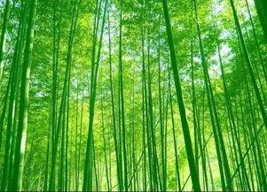 有关于植物的诗词的